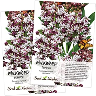 Seed Needs, Pink Common Milkweed (Asclepias syriaca) 2 Packages of 100 Seeds Untreated