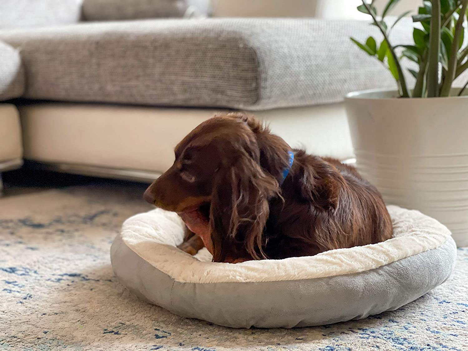 FMAL Max 51% OFF Small Dog and CAT Bed PET Limited time cheap sale Indoor BEDS Round for Dogs