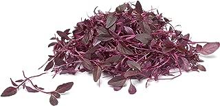 Amaranth, Red Garnet - Organic Sprouting Seeds 1 OZ