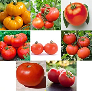 David's Garden Seeds Collection Set Tomato Determinate 9221 (Multi) 8 Varieties 400 Seeds (Non-GMO, Some Heirloom, Open Pollinated)