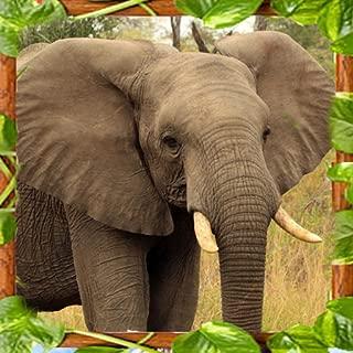 Elephant Family Simulator 3D