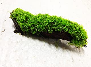 Greenpro Anubias, Java Fern, Moss and More! Freshwater Live Aquarium Plants on Driftwood for Aquatic Tropical Fish Tank Decorations - Easy for Beginner