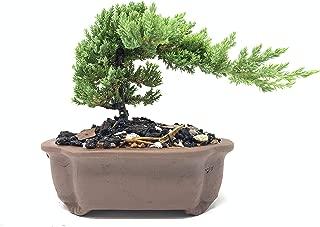 Best shallow bonsai pot Reviews