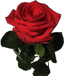 Famibay Hortensia Fleur Artificielle A Lot de 3 Rouge