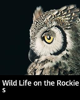 Illustrated Wild Life on the Rockies: Literary education novel