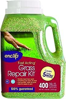 green diamond grass seed
