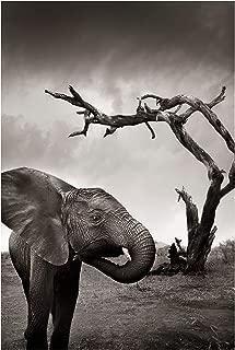 Best elephant poster ikea Reviews