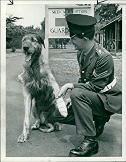 Vintage photo of Irish Guards: Fionn.
