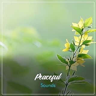 #19 Sonidos Tranquilos para el Despertar Espiritual