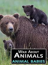 Wild About Animals: Animal Babies
