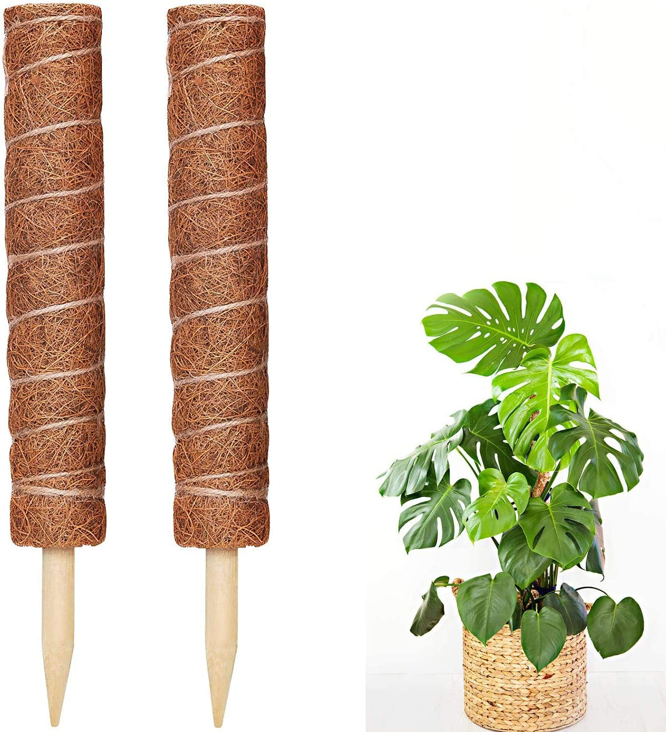 20 At the price of surprise Inch Coir Moss Pole 2 Totem 12 Super special price Plant Pack Inches
