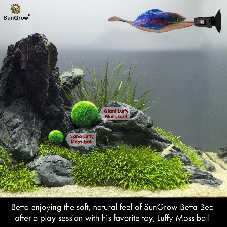 betta fish beds