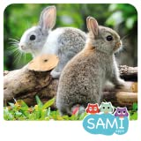 Sami Tiny Flash Cards Animals preschool kids apps, 30 animals flashcards tinycards for toddlers in 6 languages for a baby einstein