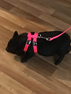 Best Pot Belly Pig Harness Of 2019 Top Rated Reviewed