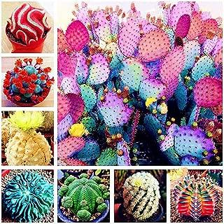 Mifutu Seed Sand Plants- 100Pcs Multi Color Cactus Seeds Flowers