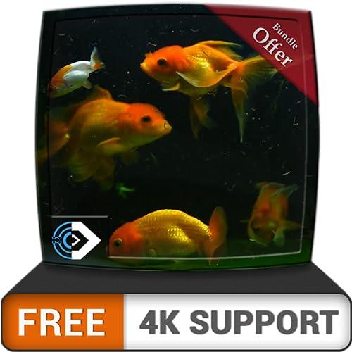 Belo aquário HD grátis - decore seu quarto com um lindo aquário em sua TV HDR 4K, TV 8K e dispositivos de incêndio como papel de parede, decoração para férias de Natal, tema para mediação e paz