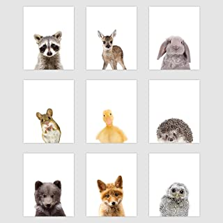 Palace Learning Set of 9 Woodland Animal Poster Prints - Cute Baby Forest Animal Wall Art - Nursery Room Decor (8