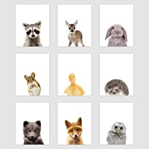 "Palace Learning Set of 9 Woodland Animal Poster Prints - Cute Baby Forest Animal Wall Art - Nursery Room Decor (8"" x 10"", ..."
