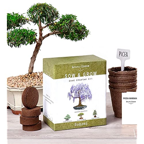 Natureu0027s Blossom Bonsai Garden Seed Starter Kit   Easily Grow 4 Types Of  Miniature Trees Indoors