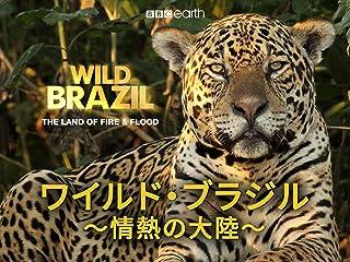 ワイルド・ブラジル 情熱の大陸(吹替版)