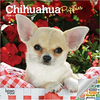 Chihuahua Puppies Calendar 2020 Set - Deluxe 2020 Chihuahua Puppies Mini Calendar with Over 100 Calendar Stickers (Dog Lovers CKC Gifts, Office Supplies)