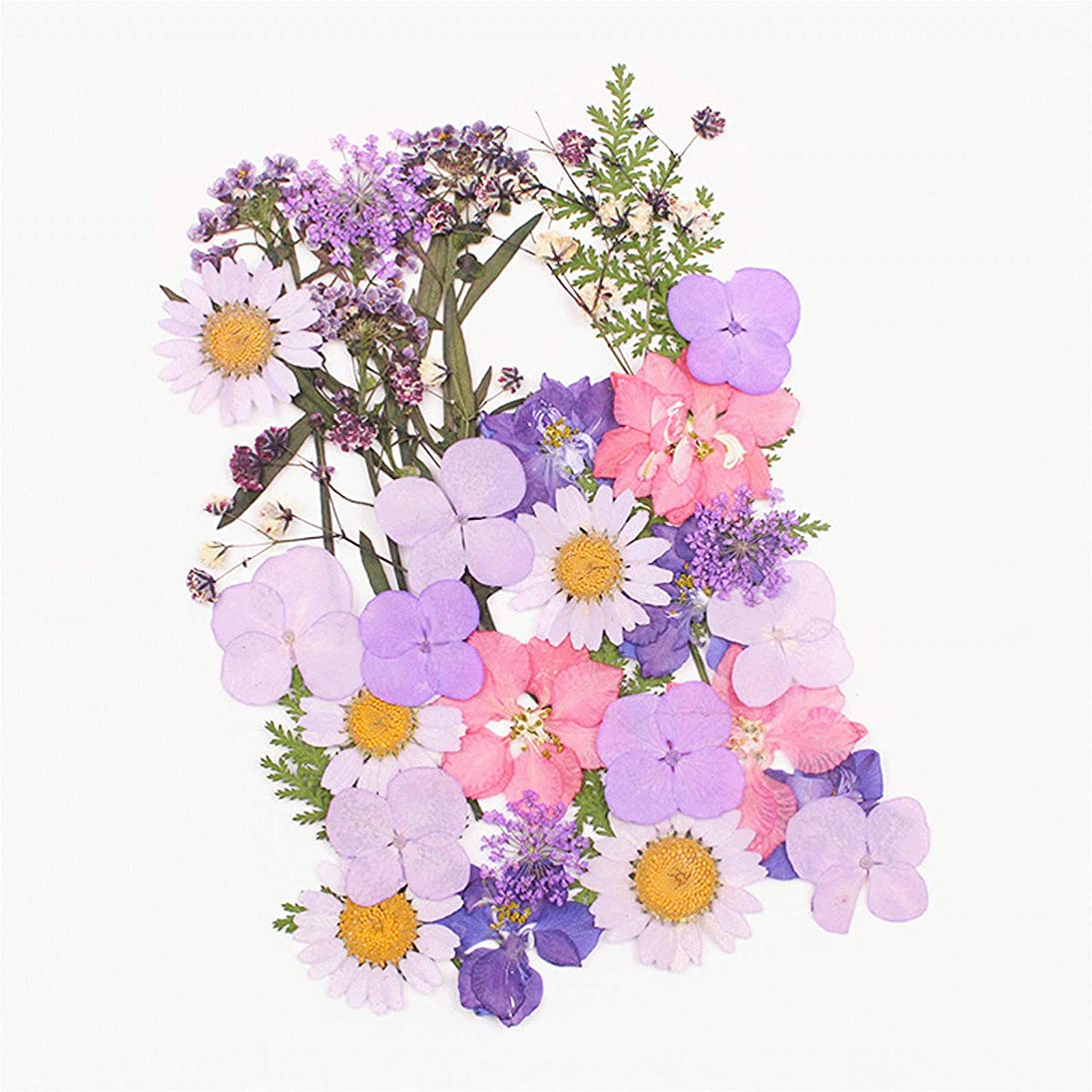 Fciqven Multicolor Natural Real Dried Pressed Flowers DIY Pressed Flower Decorations for Art Craft,Resin Jewelry Making (Style-3)