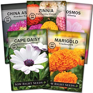 Gonikm 100pcs// Bag Rainbow Tulip Bulbs Seeds Garden Flower Plant Flowers
