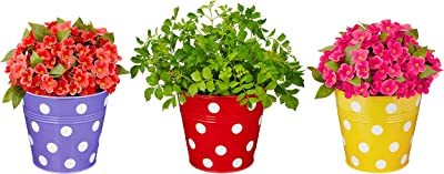 Amazon Brand - Solimo Corrosion Resistant Hanging Planter - Set of 3 (Round - Red, Yellow, Purple)