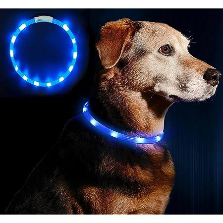 Leuchtie Leuchthalsband Plus Neongrün Größe 50 I Led Halsband Für Hunde I 100 H Leuchtdauer I Wasserdicht I Enorm Hell Haustier