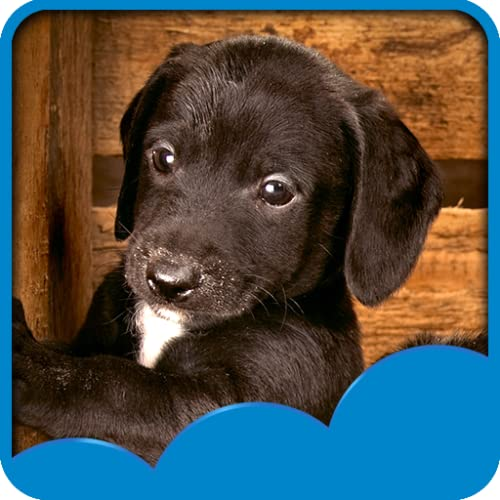 Puppies Live Hintergrundbilder