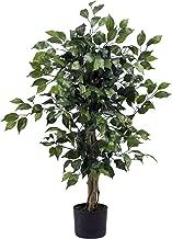 Best 3 ficus silk tree Reviews