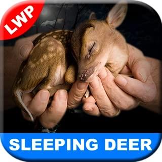 Best deer live wallpaper Reviews