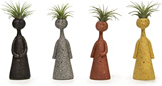Best brain cactus plant Reviews