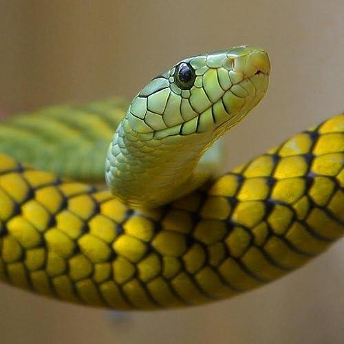 Reptilien Arten Trivia Quiz