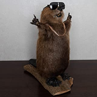 stuffed beaver taxidermy for sale