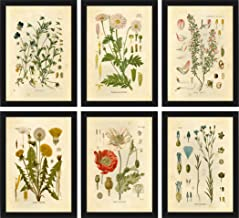 flower wall prints