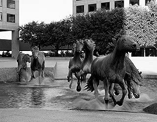 Photo Metal Photography Poster - Robert Glen's Mustangs of Las Colinas sculptures Irving Texas 19