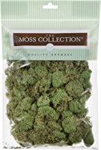 The Moss Collection 2050 Floral Moss Reindeer Basil Small, Multicolor