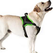 Golener Led Dog Harness No Pull, Reflective Puppy Harness, Adjustable Dog Vest Harness with 2 Leash Clips, Breathable Oxfo...