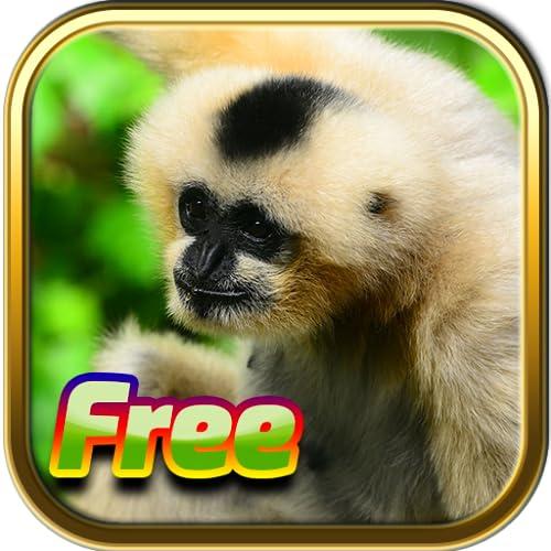 Juegos de animales gratis