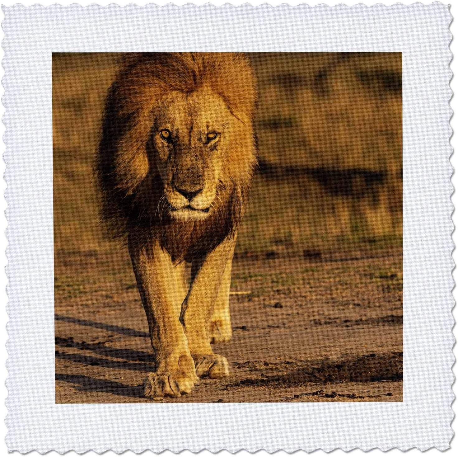 3dRose Max 69% OFF Tanzania Serengeti NP. Fees free!! Male lion - up. Quilt Squar Close