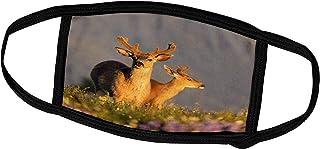 3dRose Danita Delimont - Gary Luhm - Deer - USA, Washington, Blacktail Buck in Velvet, Hurricane Ridge. - Face Masks (fm_1...