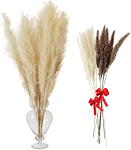 Bellas Pampas Long Natural Dried Pampas Grass for Home Decor 5 Long Fluffy Natural Dried stem  Along with Small Pampas for Wedding, Home Bouquet, or Gifts from Inspiratian