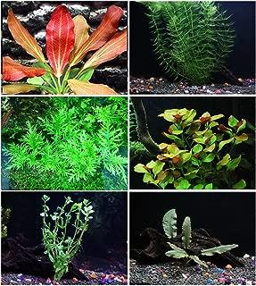 California Bundle - 25+ stems / 6 species Live Aquarium Plants Package