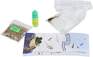Nature Gift Store 1 Leopard Frog Tadpole: Live Tadpoles