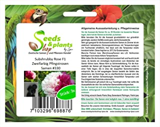 3 flor de peonía rosa Subshrubby F1 semillas bicolor planta