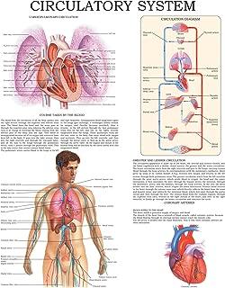 Circulatory system: E-chart Full illustrated