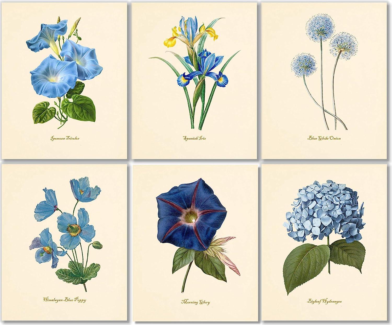 Blue Flower Wall Art Ranking TOP11 - quality assurance Botanical Vintage Decor Floral Pri