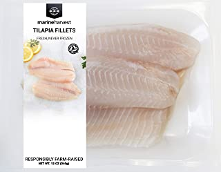frozen red snapper fish