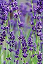 Wild Lavender - Lined Notebook with Margins: 101 Pages, Medium Ruled, 6 x 9 Journal, Soft Cover